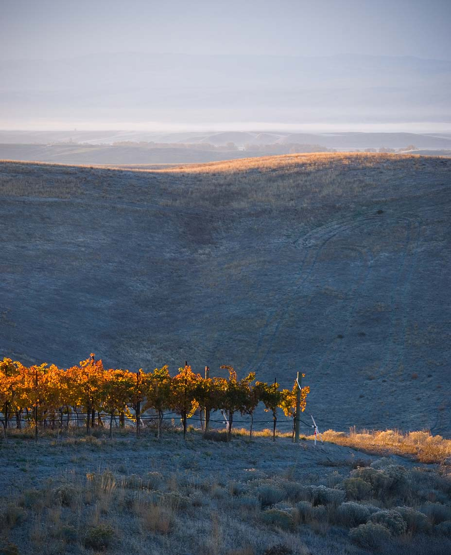 Woodward Canyon Estate Vineyard in Autumn